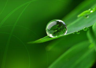 Hydrodecor, paysagiste d'intérieur